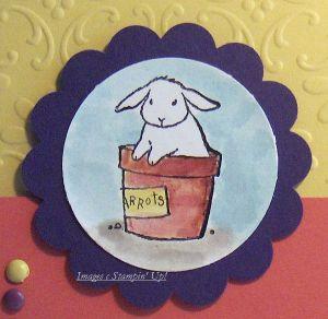 Carrot_bunny_close