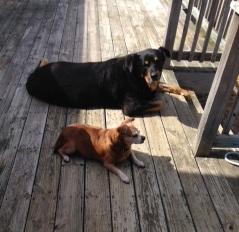Hoss & Walter, Pets, Canine Hygiene