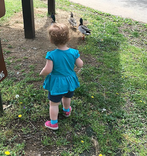 Amelia and the Ducks